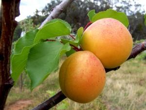фруктовые наполнители